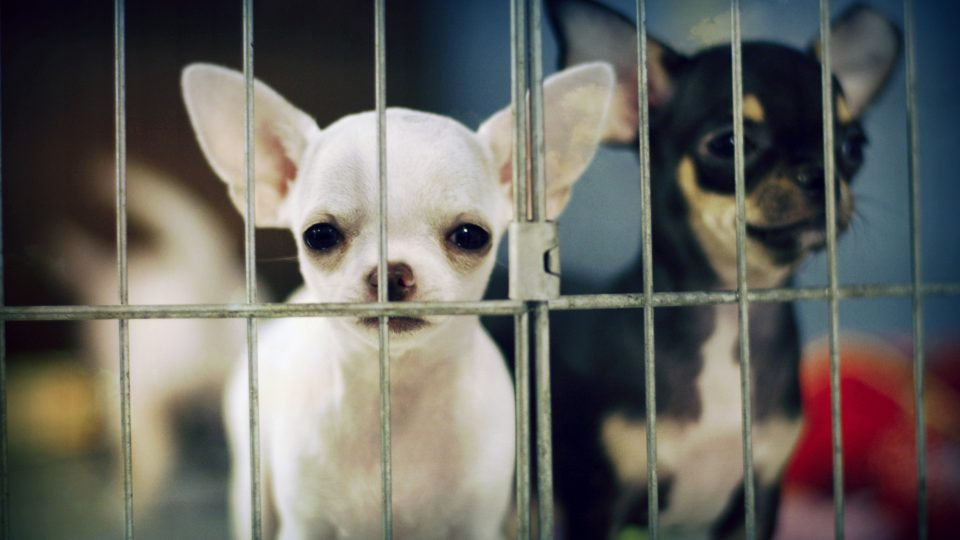 Dogs behind bars - dog discrimination