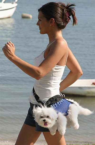 dog fashion donts fanny packs