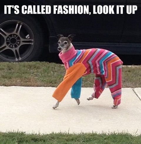 dog fashion donts pantsuit