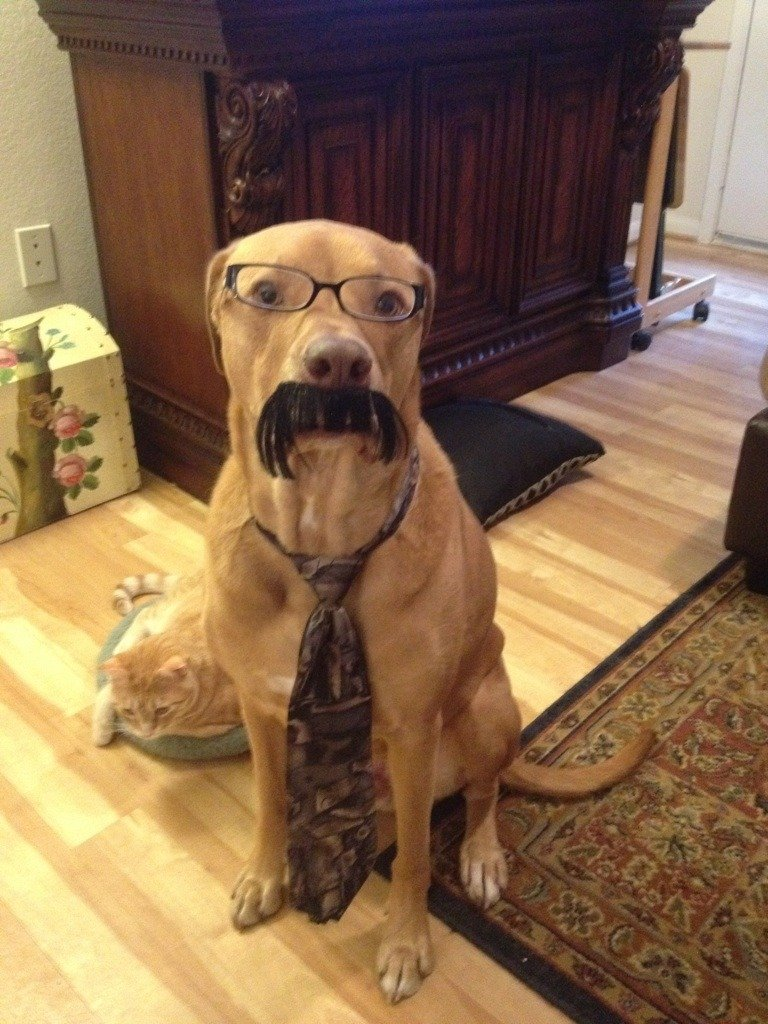 dog-mustache-and-tie