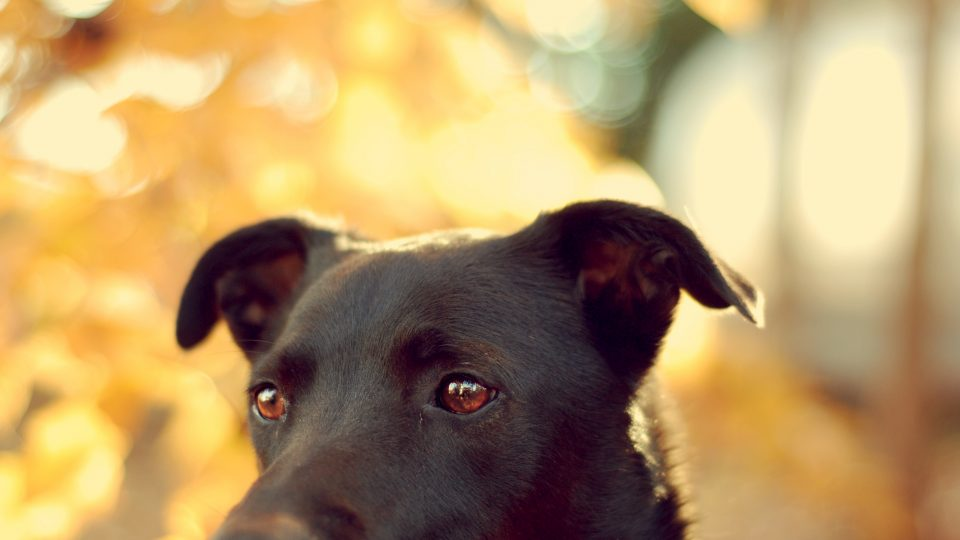 Dog in the sunset - spoil your dog