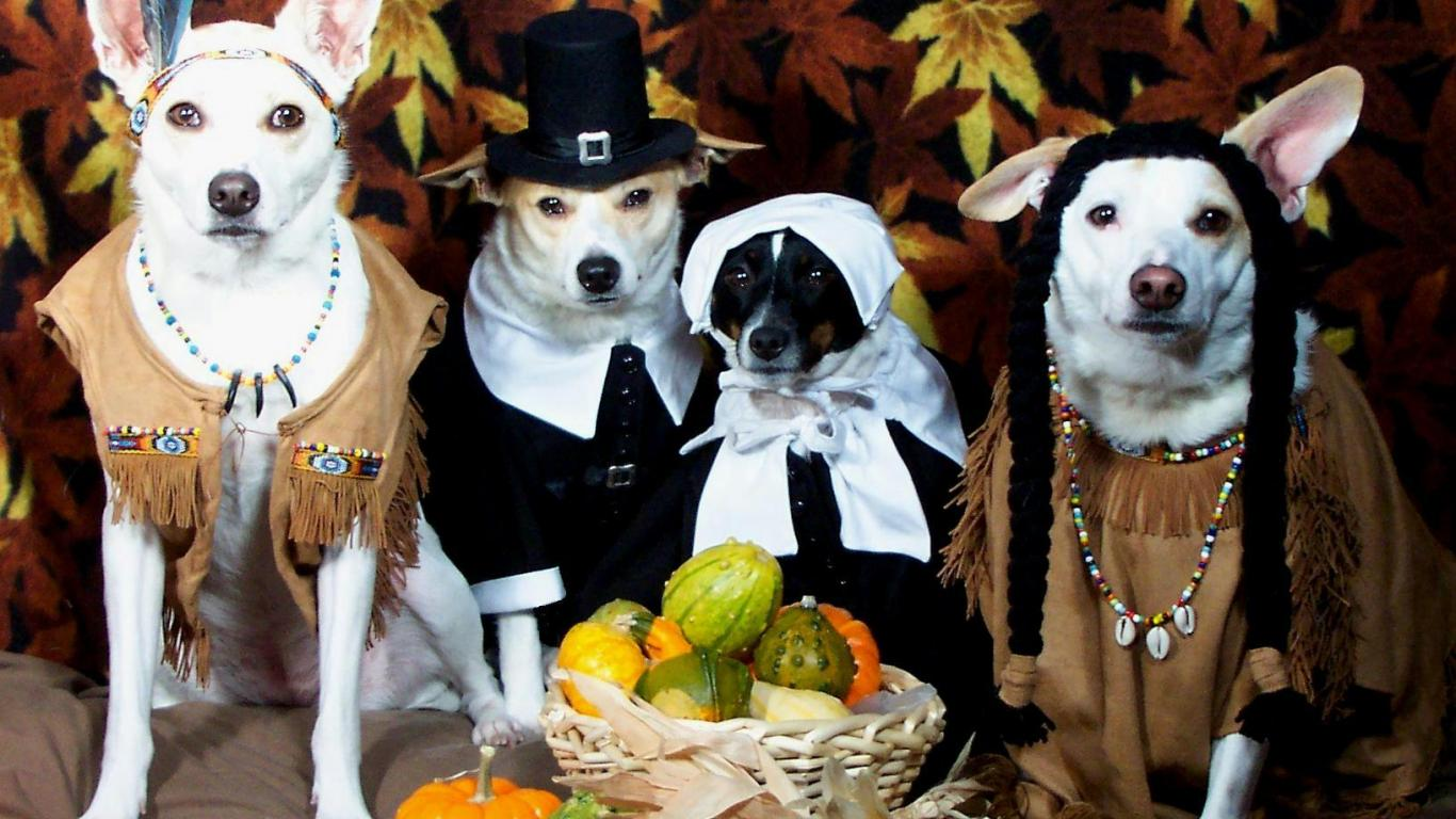 9 dogs that look like thanksgiving dinner
