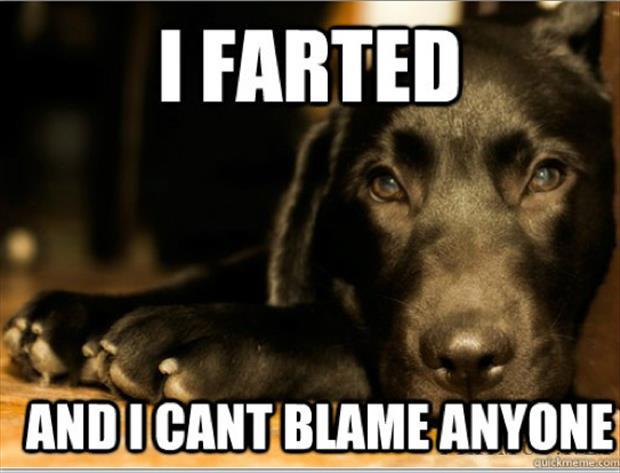 first-world-dog-problems-meme-14