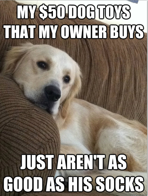 first world dog problems meme2014-11-22 at 9.14.12 AM 7