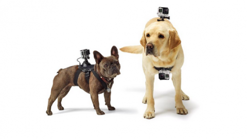 Go Pro Fetch - holiday gifts for dogs