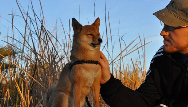 The Top 7 Phoenix Dog Parks