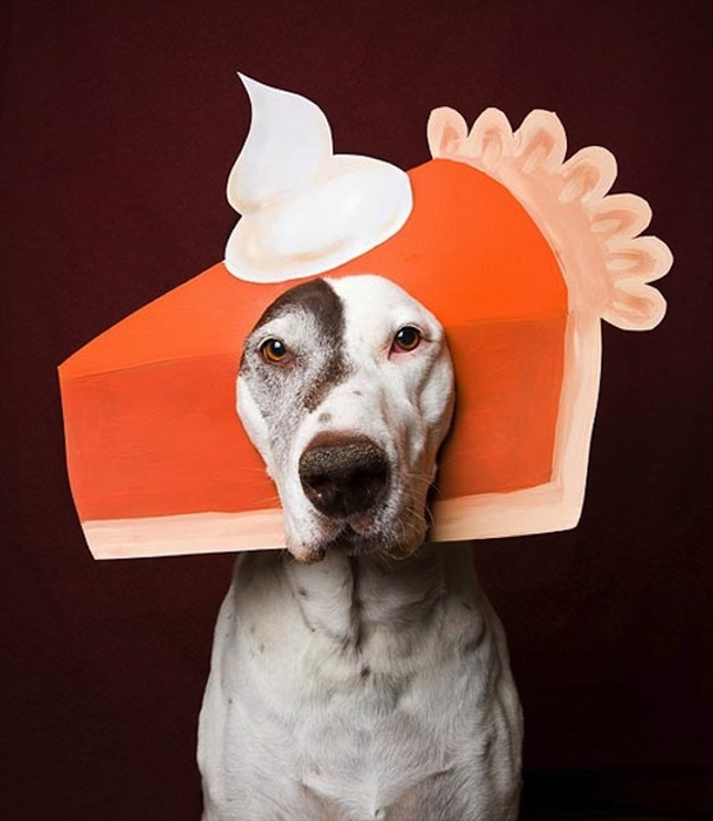 pumpkin pie dog