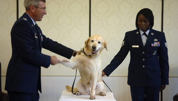 7 Inspiring Facts About Secret Service Dogs
