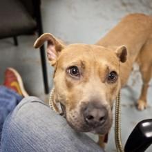 Sweet dog - Seattle Animal Shelter