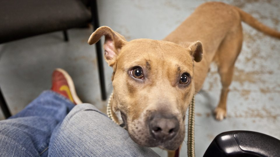 Sweet dog - Seattle Animal Shelter