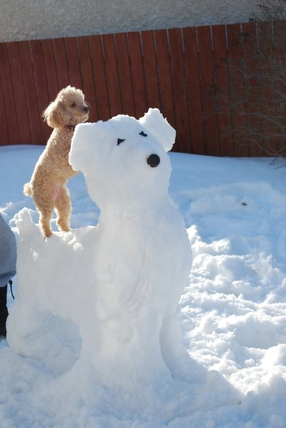 dog snowman - winter dog