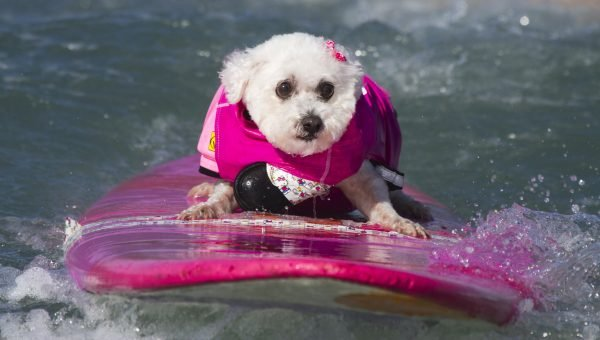 7 Dog Friendly San Diego Hangouts