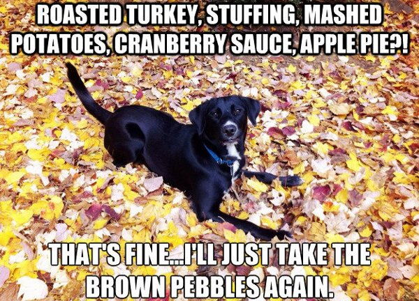 9 Dogs That Look Like Thanksgiving Dinner | The Dog People ...