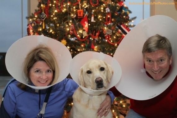the family that cones together - dog christmas cards