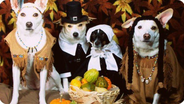 8 DIY Thanksgiving Dog Treat Recipes