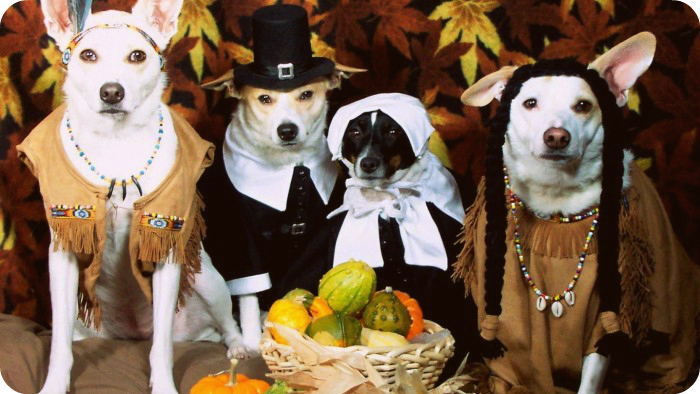 Dog Thanksgiving Lookalikes