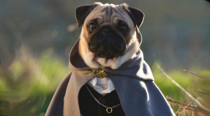 Bilbo Baggins Hobbit Pug
