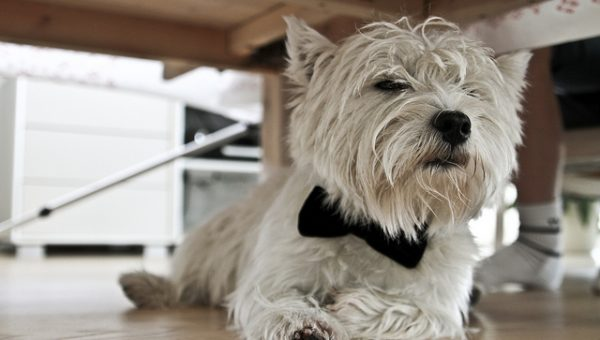 8 Glamorous New Year's Looks for Your Dog