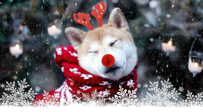akita rudolph snow