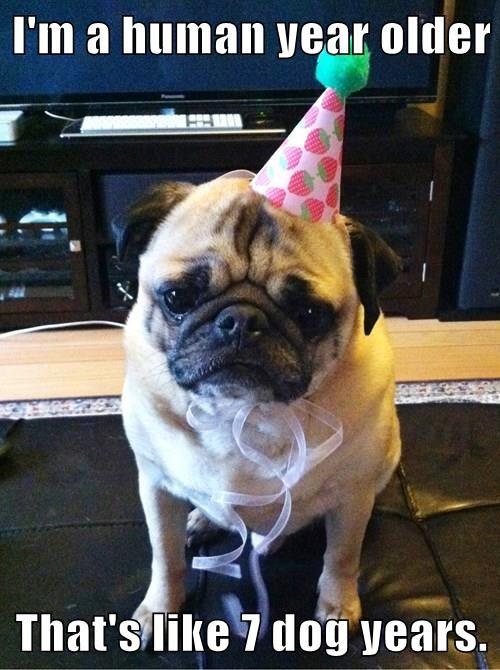 depressed birthday pug