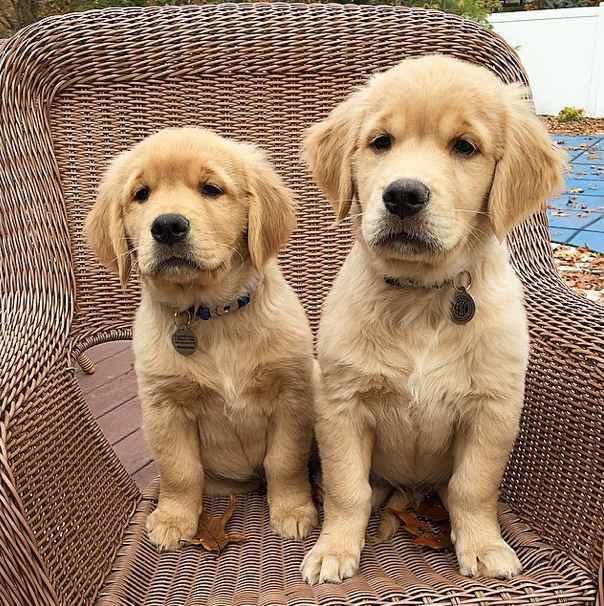 Comet and Scooter - Instagram famous dogs