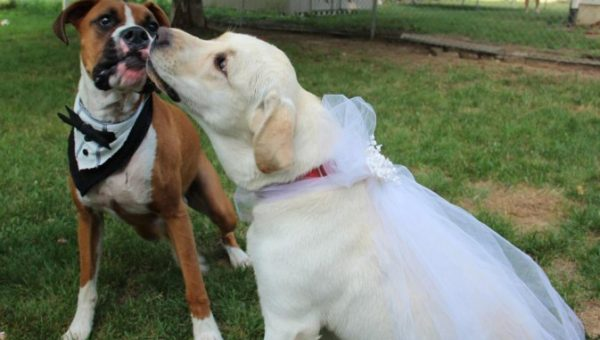 Are Dog Weddings Still a Thing? (Hint: Yes)