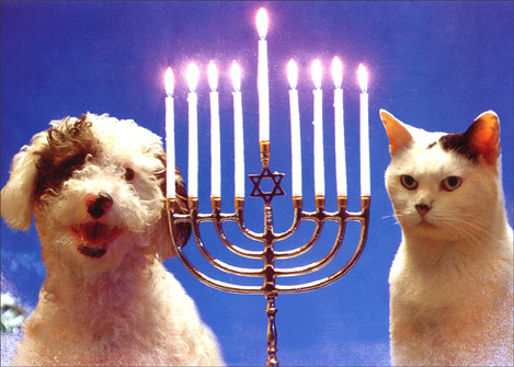 Dog, cat, menorah