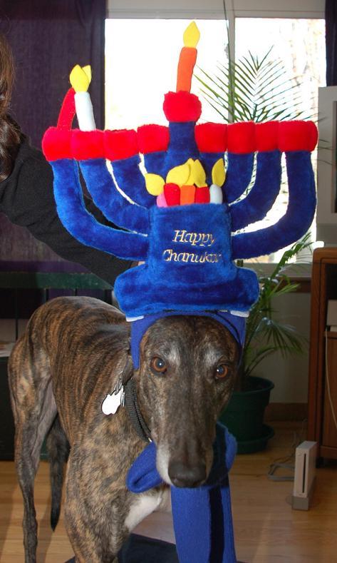 Hanukkah dog