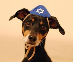 Dog hanukkah