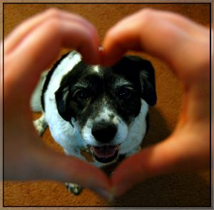 Dog in a heart - health benefits of having a dog