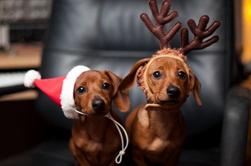Dogs in holiday costumes