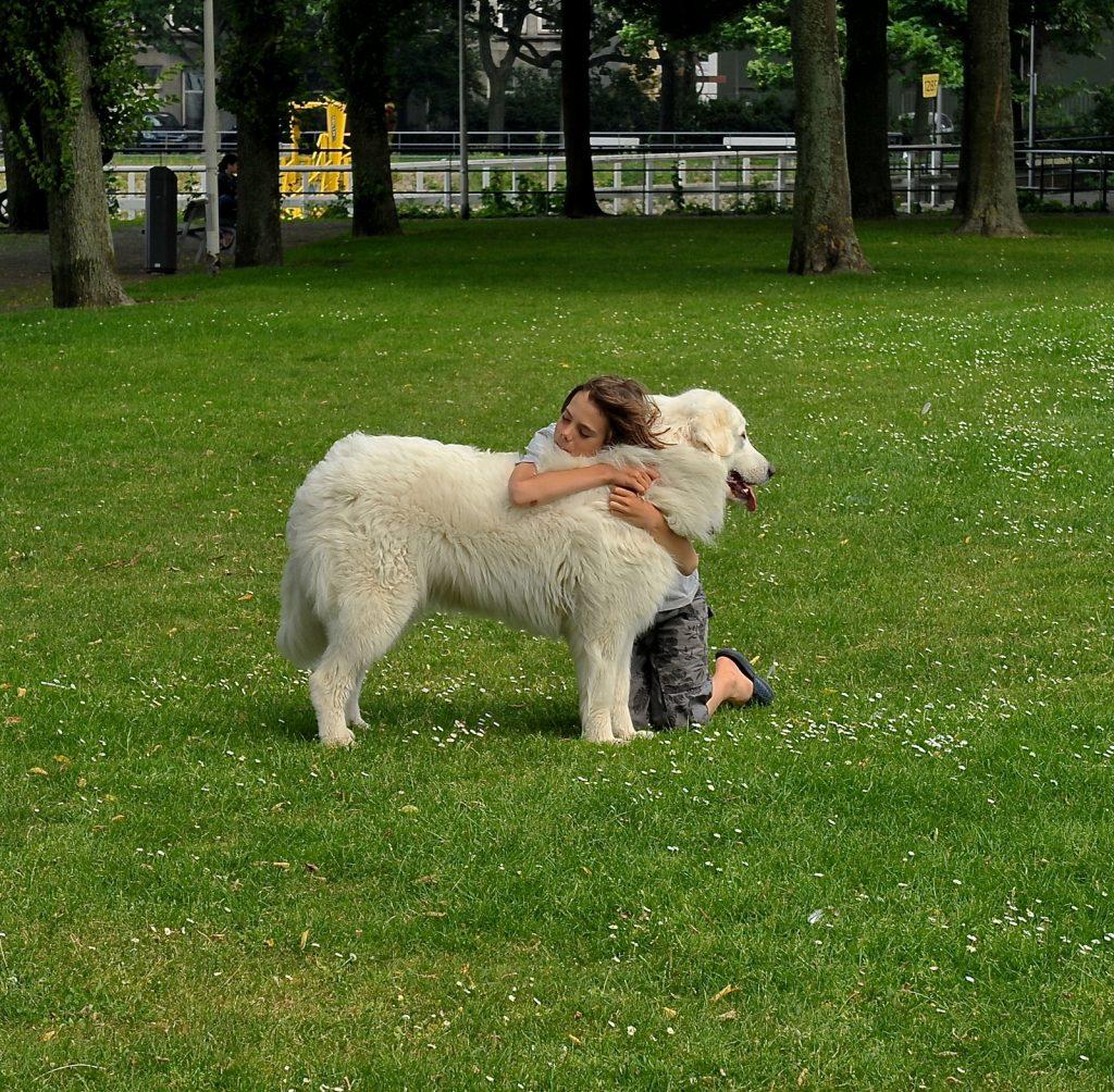 Dog and parent hugging