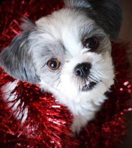 Dog in tinsel