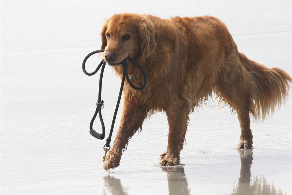 Aggressive, Stable, Confident: How to Test Your Dog's