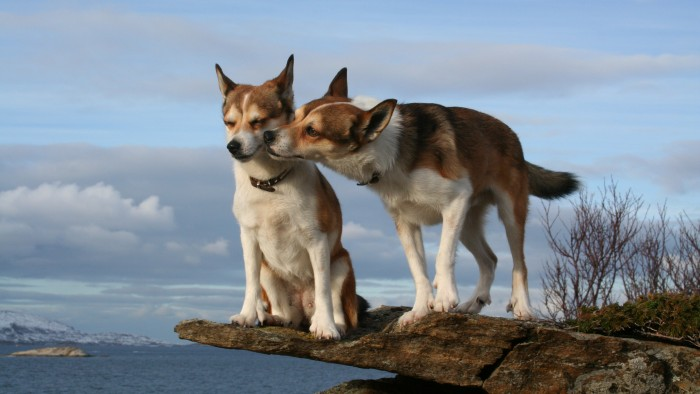 The 6 Best Dating Sites for Dog Lovers | Rover Blog