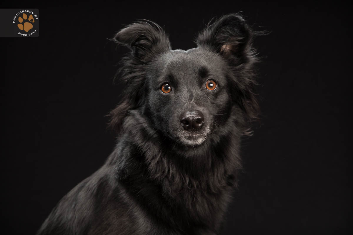 Fred Levy, Black Dog Project