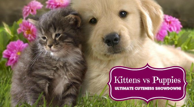 Kittens vs Puppies battle of cuteness