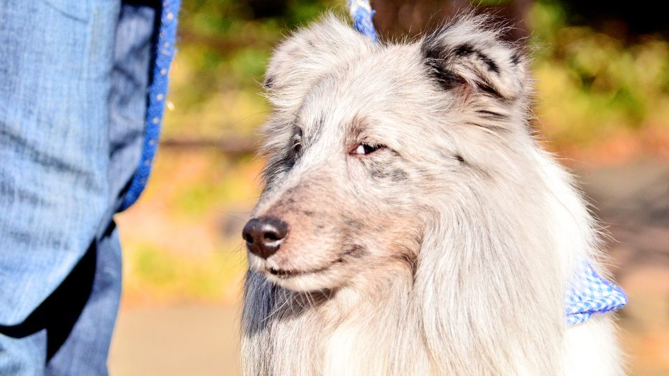 Sly look from a dog - What makes a good dog go bad?