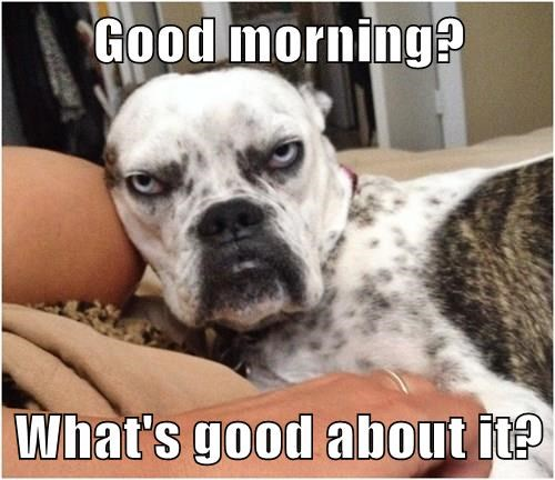 Good Morning Vietnam Oh My God It S Early : Dogs with a case of the mondays rover