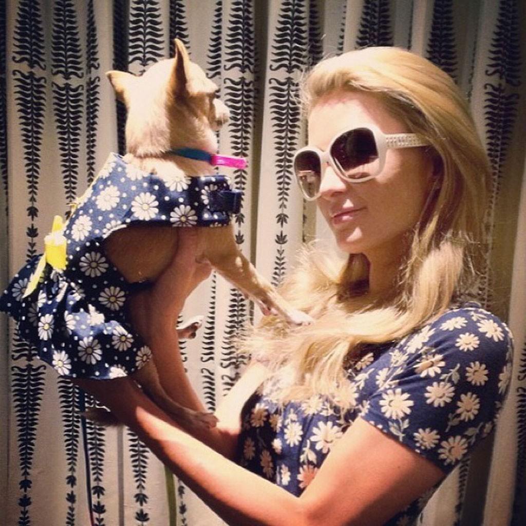 paris hilton matching chihuahua daisy dress