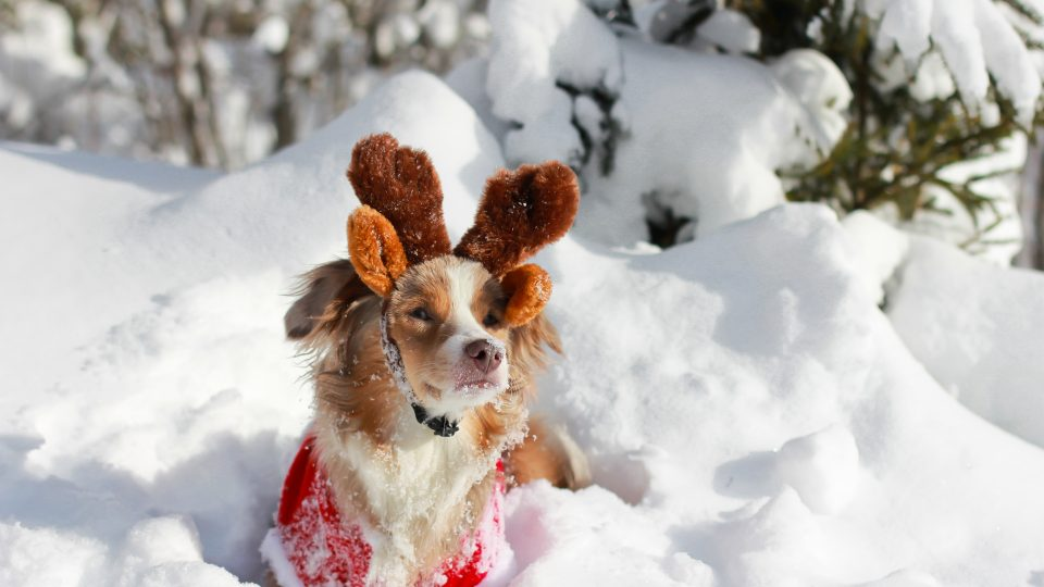 Reindeer dog - crowdfunded products for pets