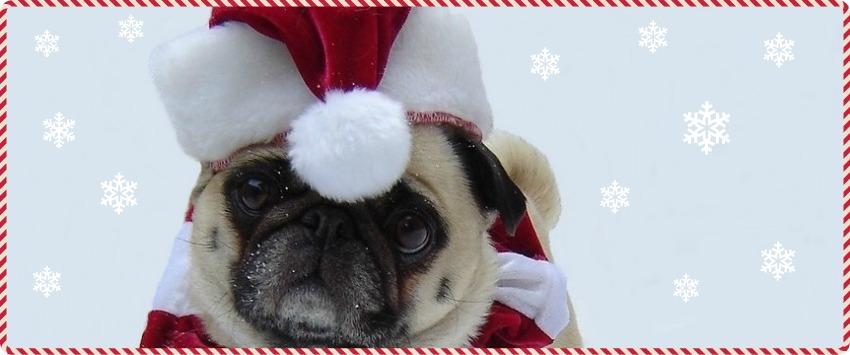 Santa hat pug