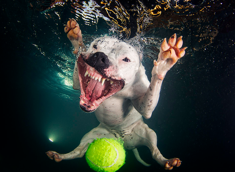 Seth Casteel, Underwater Puppies - Best dog photography