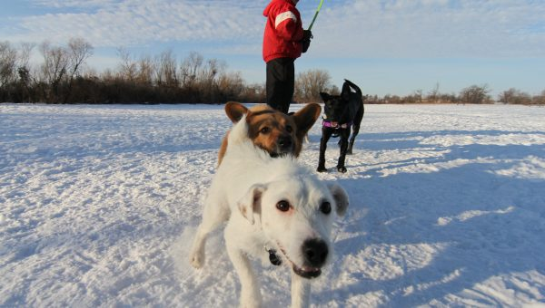 How to Keep Your Pet Safe in the Winter Months