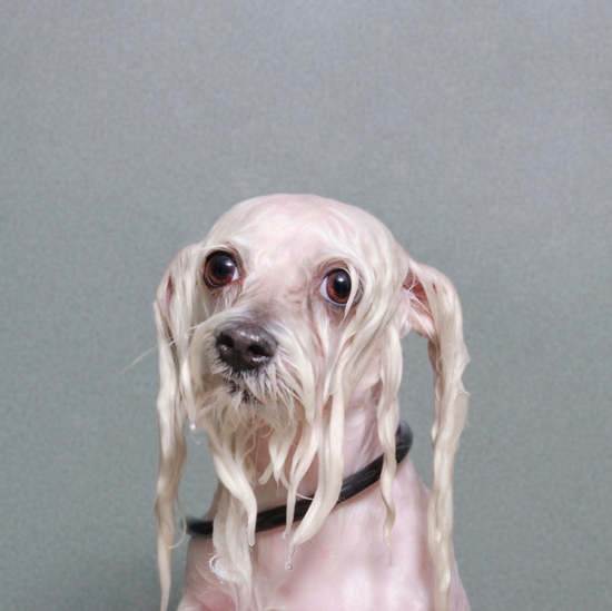 Sophie Gamand, Wet Dogs - Best dog photography