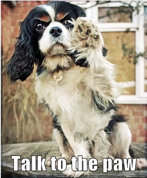 talk to the paw cavalier king charles spaniel