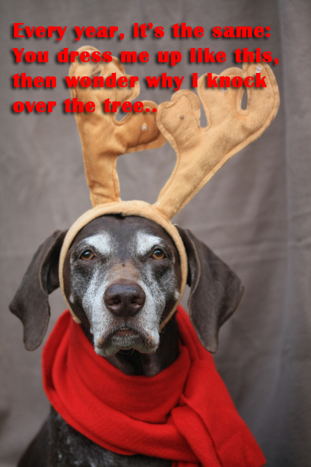 dog christmas revenge