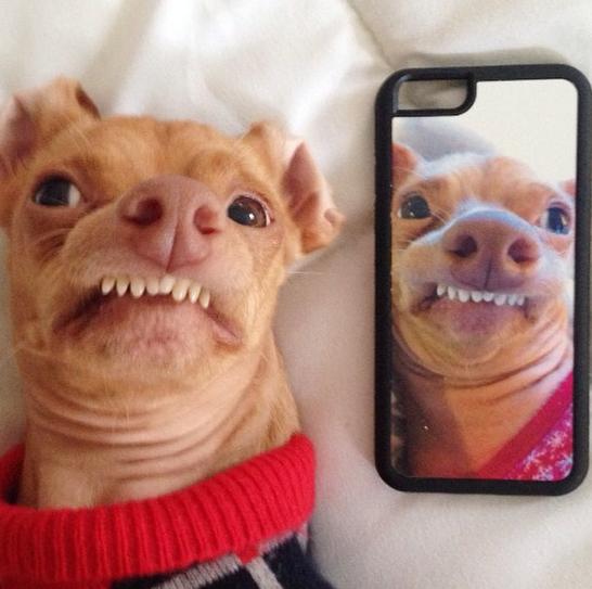 Tuna - Instagram famous dog