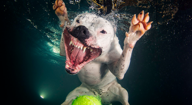 The Best Dog Photography of 2014