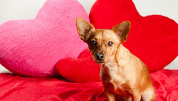 "4 Surprising Ways Your Dog Says ""I Love You"" (Including Yawning)"